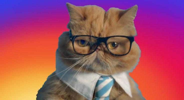 Как сделать Инстаграм бизнес профилем